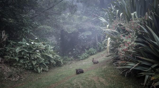 Dimitile, La Réunion