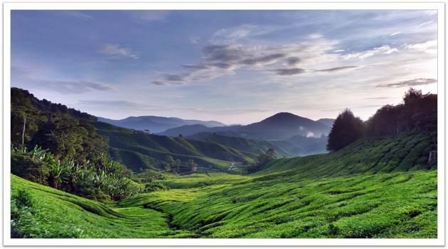 Sunrise at Cameron Highlands, Malaysia